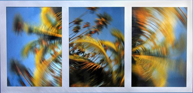 Windy Palms 30x14